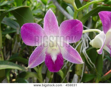 Bangkok - Orchid