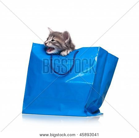 Crying little kitten in a gift bag isolated on a white background cutout poster