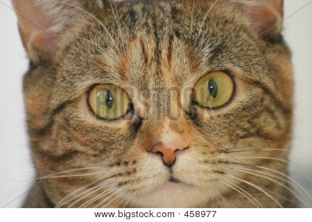 Close Kitty