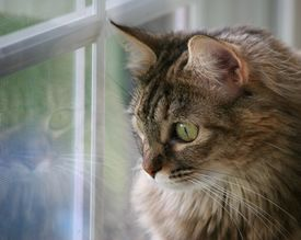 Cat and Her Reflection