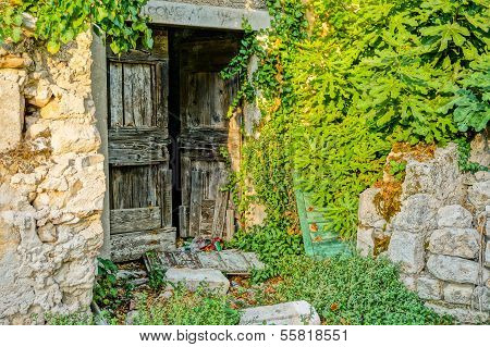 Old Wood Door Overgrown By A Fig Tree