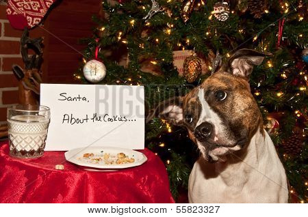 Dog Eats Santa's Cookies