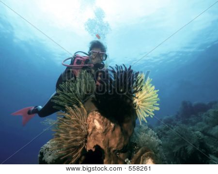 Female Scuba Diver And Fauna