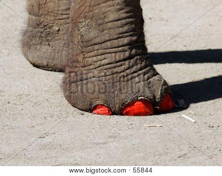 Fashionable Elephant