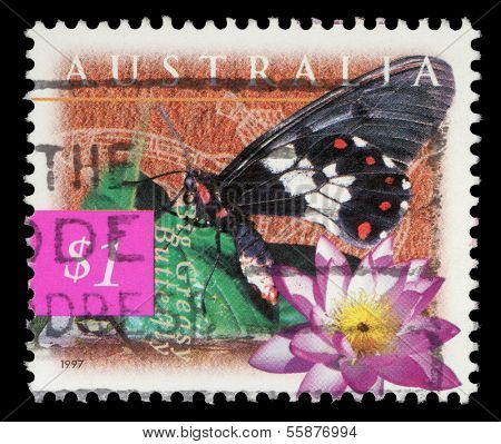 AUSTRALIA - CIRCA 1997: A stamp printed in Australia shows Big Greasy Butterfly and blue lily (Nymphaea violacea), circa 1997