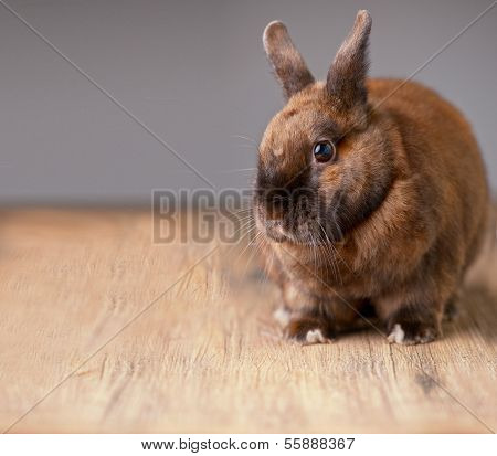 Red Furry Bunny Listens
