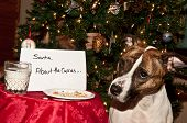 A cute dog that just ate the cookies left out for Santa. poster
