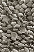These are black and white pattern of mussels. Such mussels are suggested as a souvenir in the seaside places. poster