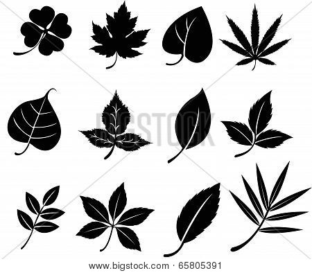 Set Of Silhouette Leaves (vector)