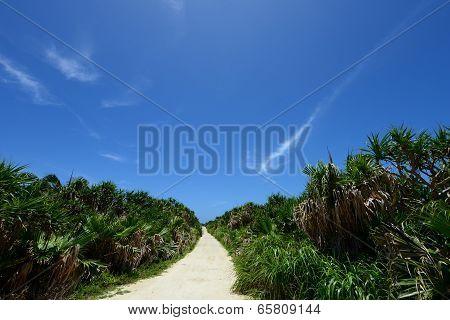 Beautiful subtropical Okinawa