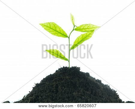 Young Small New Life Green Plant