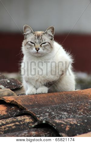 Cat on a Tile Roof