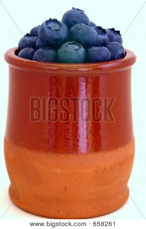 Blueberries In Small Pot