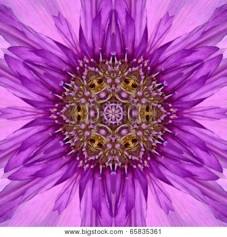 Purple Concentric of Chrysanthemum Flower Center Close-up. Mandala Kaleidoscopic design poster