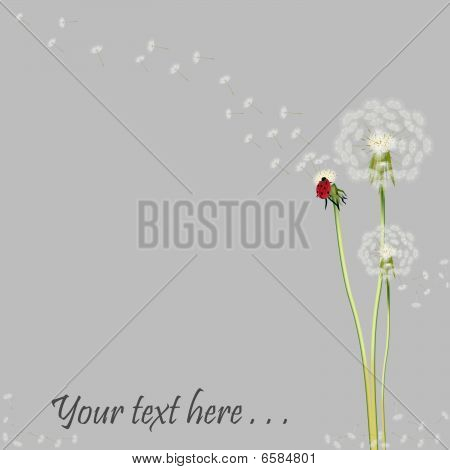 Dandelion with ladybug on lilac background with place for text poster