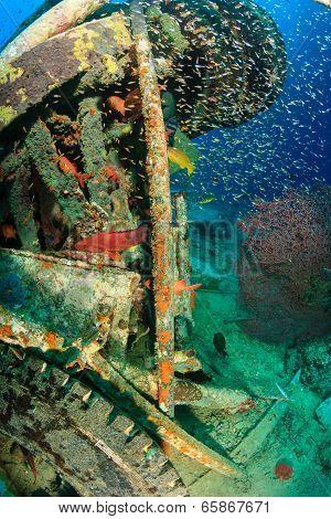 Glassfish school around manmade wreckage