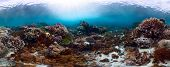 Underwater panorama of the vivid coral reef in tropical sea. Bali Barat National Park, Indonesia poster