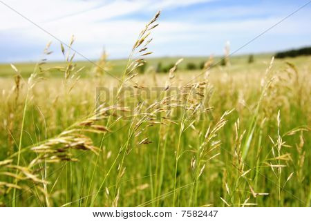 Tranquil Countryside - Field of Grass