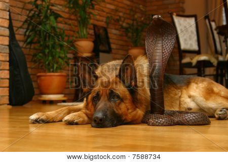 Dog And Wooden Snake