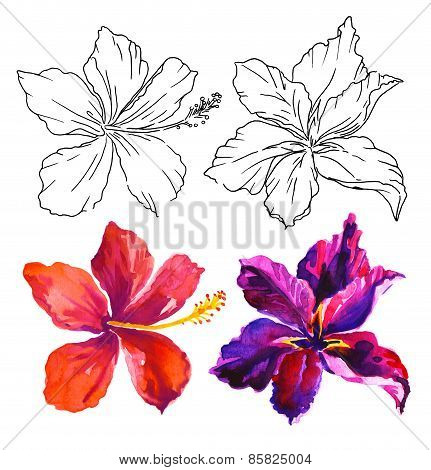 Watercolor Flower Illustration With Contour. Vivid Hibiscus And Orchid
