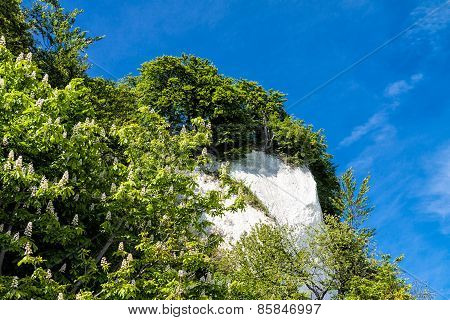 Chalk cliffs on shore of the Baltic Sea on the island Ruegen (Germany). poster