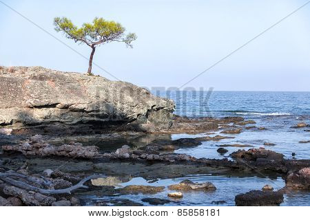 Lone Pine on the cliff