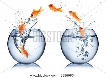 goldfish ranging from a bowl to another, change concept
