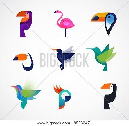 Tropical birds - toucan, flamingo, parrot and hummingbird