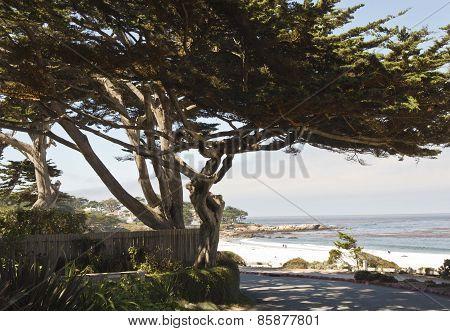 Carmel By The Sea Beach In California