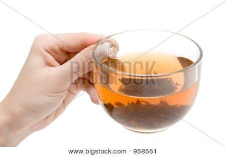 Teacup In Hand