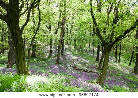Flowering Forest Floor