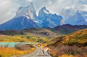 Majestic peaks of Los Kuernos over Lake Pehoe. On a dirt road is worth guanaco - Lama. The national park Torres del Paine, Patagonia, Chile poster
