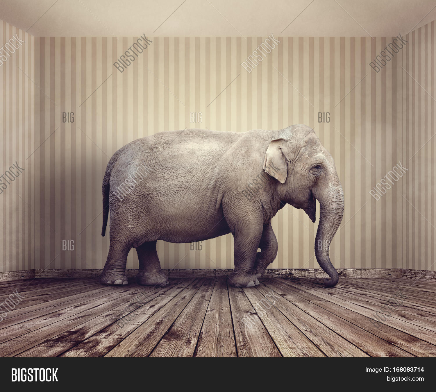 Elephant In A Room Images Best Elephant 2017