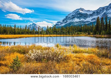 Pine trees reflected in the lake. Sunny day. Waterlogged valley in the snowy Rocky Mountains. The concept of ecotourism  and active tourism