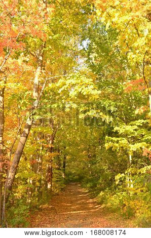 Autumn leaves covering a path into the woods