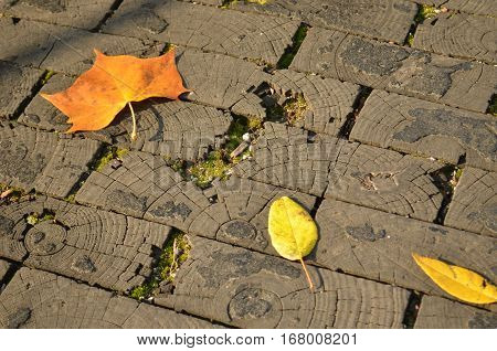 Pathway laid with gray preserved wood bricks