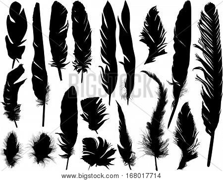 illustration with eighteen black feathers isolated on white background