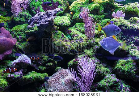 Beautiful colorful corals. Among the corals swim little fishes