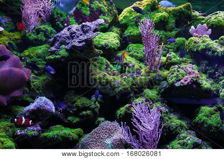 Beautiful bright coral. Among the corals swim little fishes