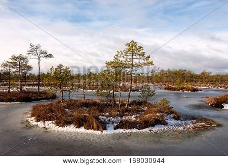 Winter bog islands in frozen bog pond