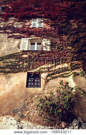 Ancient wall with bindweeds on it in picturesque Eze village in South of France