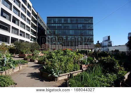 Vegetables grow in Community Garden in San Francisco California with surrounded by tall buildings.
