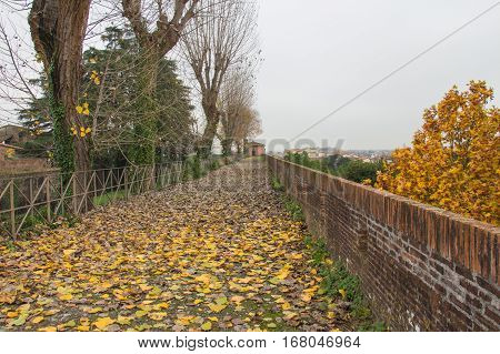 The view of autumn landscape with fallen yellow leaves on a path in the Medici Fortress of Santa Barbara. Pistoia. Tuscany. Italy.