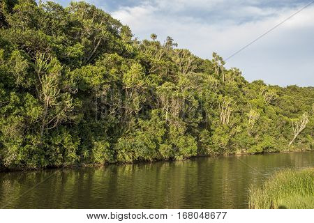 A tropical forest is viewed from the other bank of the river meandering down.