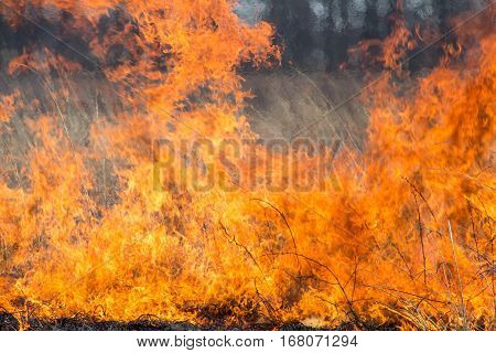 Close up of a controlled prairie fire
