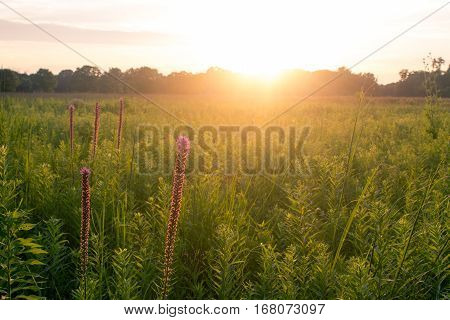 Sunset over prairie grass and flowers in foreground
