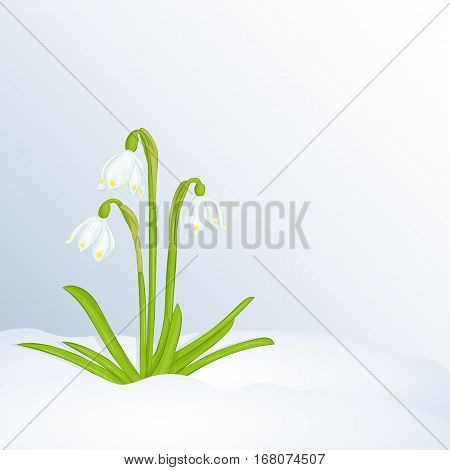 Beautiful spring background with Leucojum in snow. Greeting cards congratulations with spring or Women's Day. Holiday poster or placard template in simple cartoon style. Vector illustration. Flower Collection.