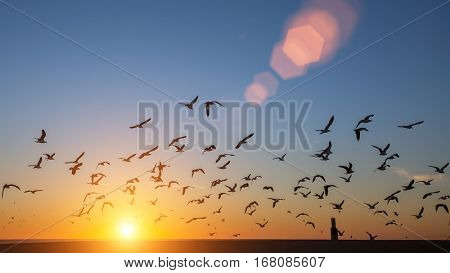 Silhouettes flock of birds over the Atlantic ocean during sunset. Seagulls and albatross.