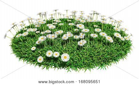 Natural grass arena with flowers isolated on white background. Arena for your design. The symbol of spring, environment, growth and nature. 3D illustration