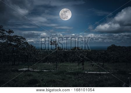 Silhouettes of trees against night sky with clouds and bright full moon over tranquil nature on dark tone from national park. Beauty of nature. The moon was NOT furnished by NASA.